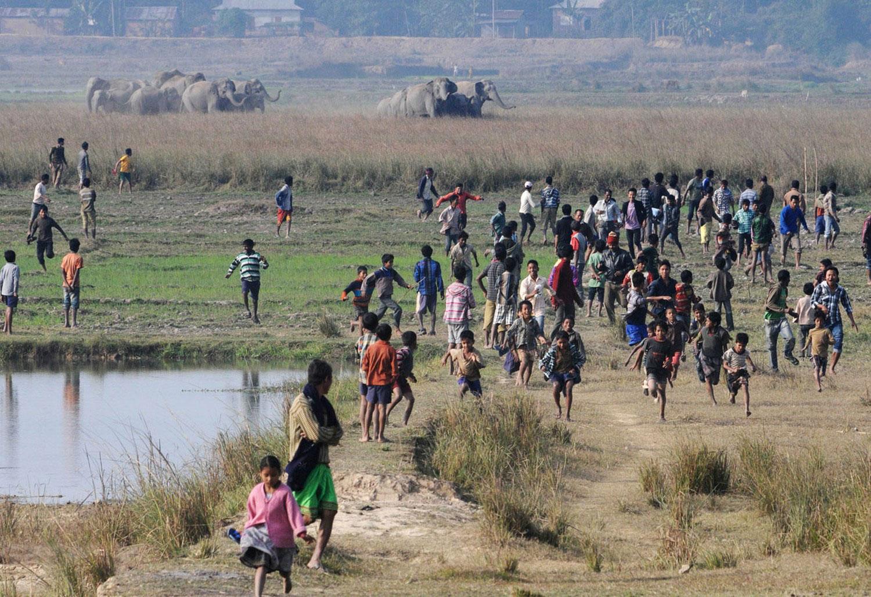стадо диких слонов, фото из царства животных