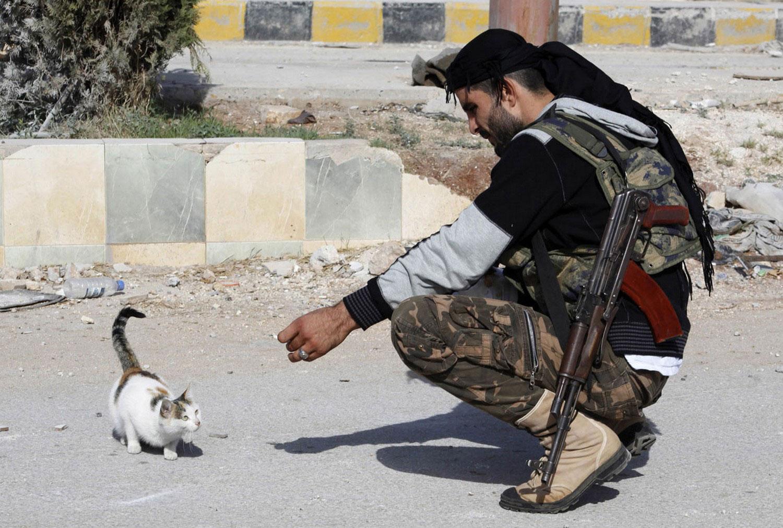 котенок на улицах Сирии, фото из царства животных
