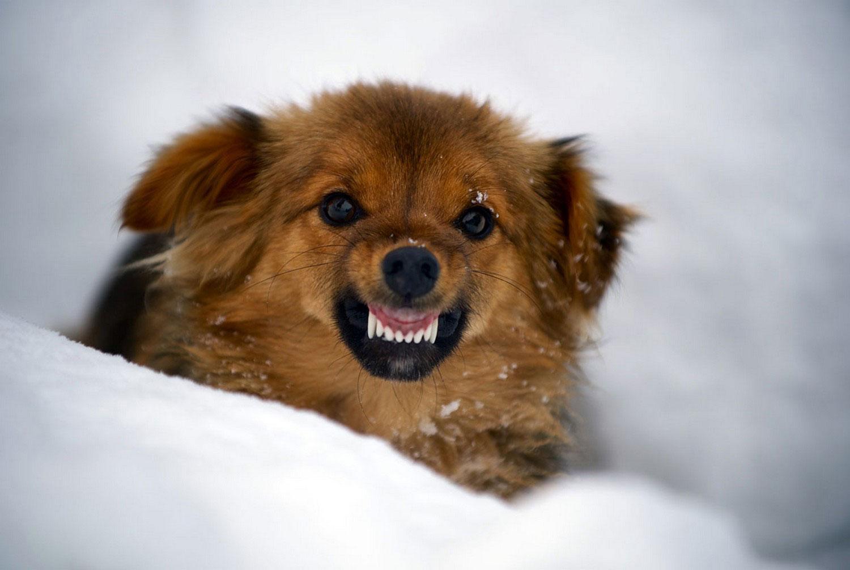 собака в горах в снегу, фото