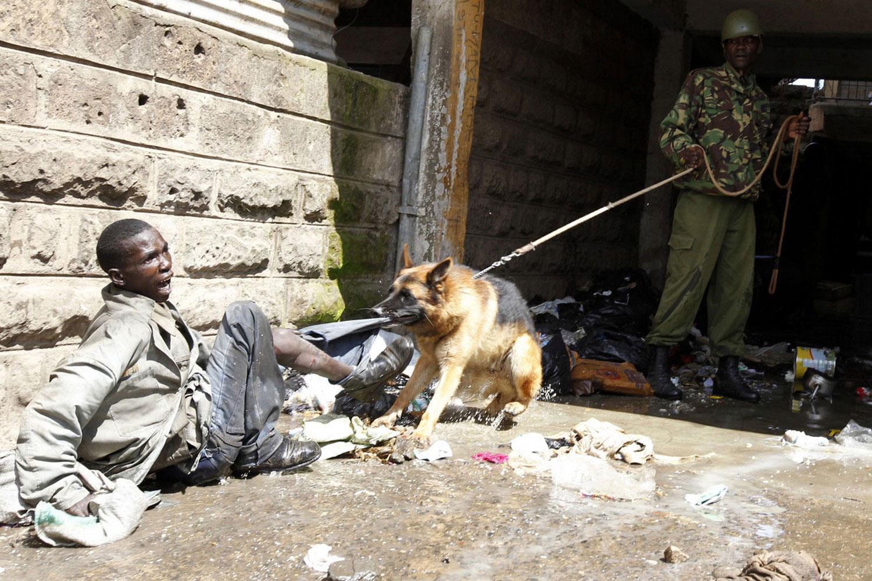 овчарка в полиции, фото
