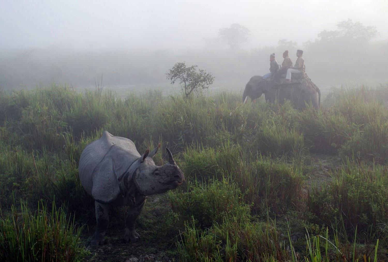туристы в Индии, фото из царства животных