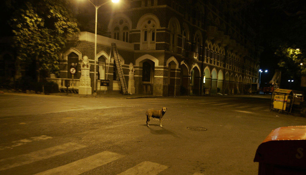 собака в Мумбаи, Индия, фото