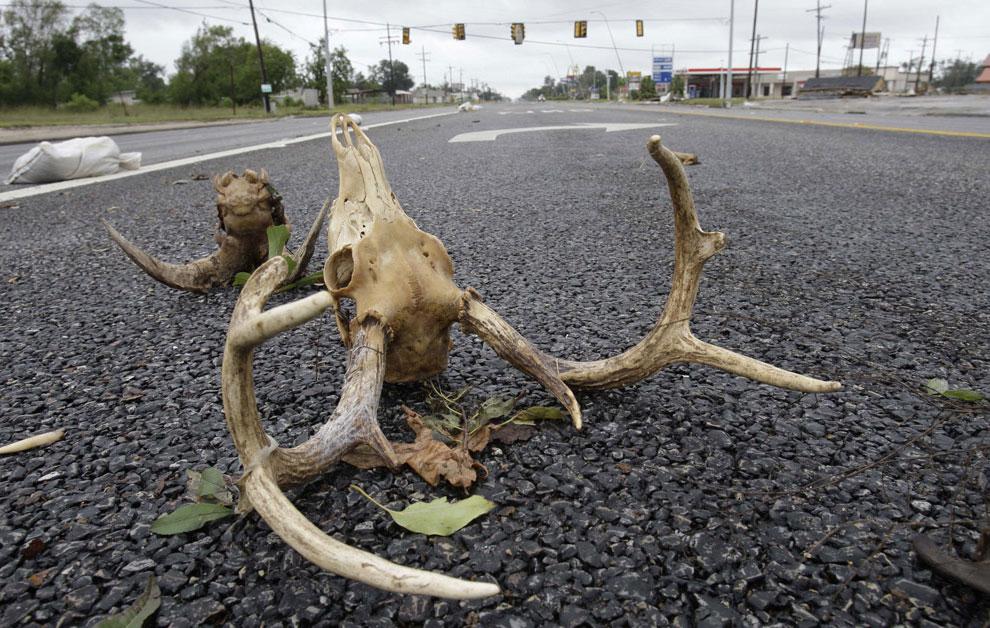 последствия после урагана Айк, США, фото
