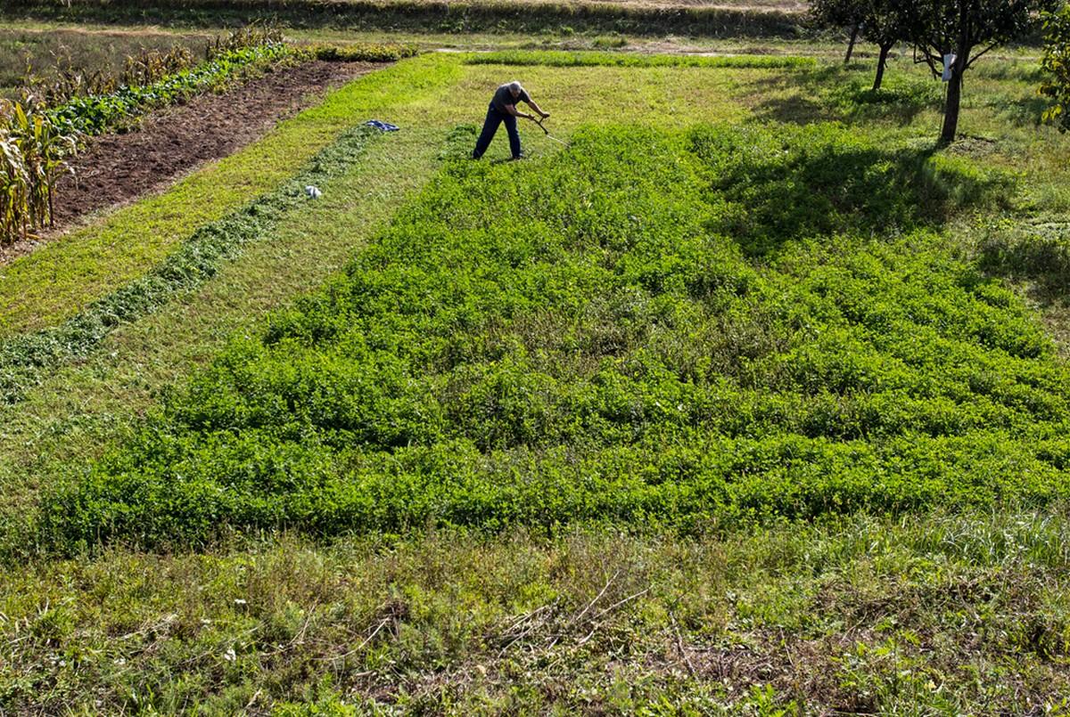поле с люцерной
