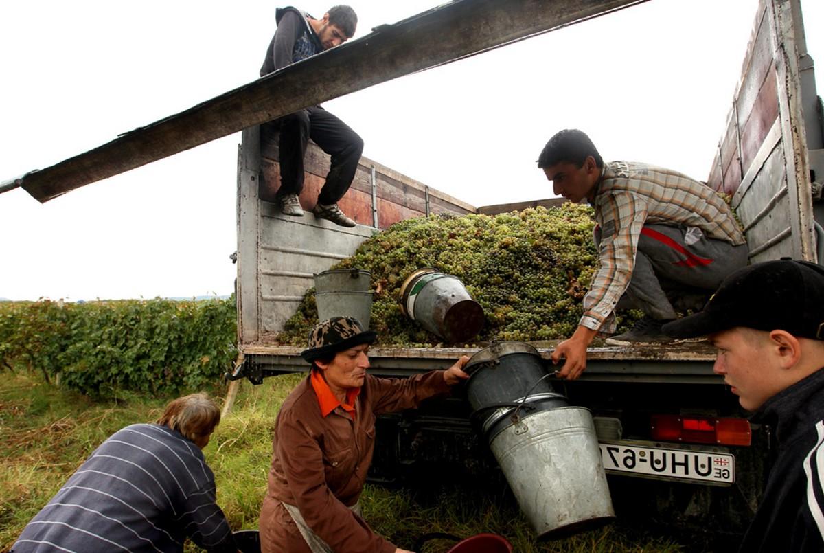 виноград в машине