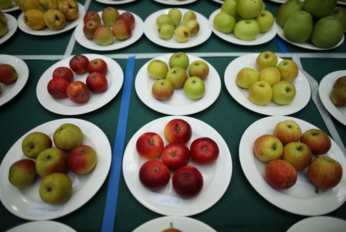 яблоки на тарелках