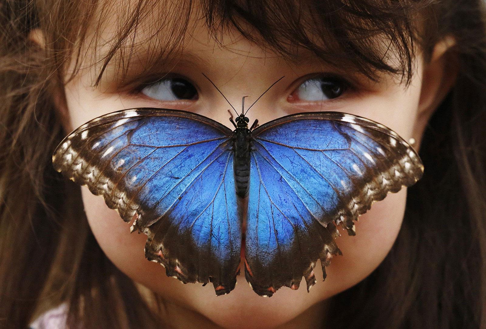 девочка на выставке бабочек