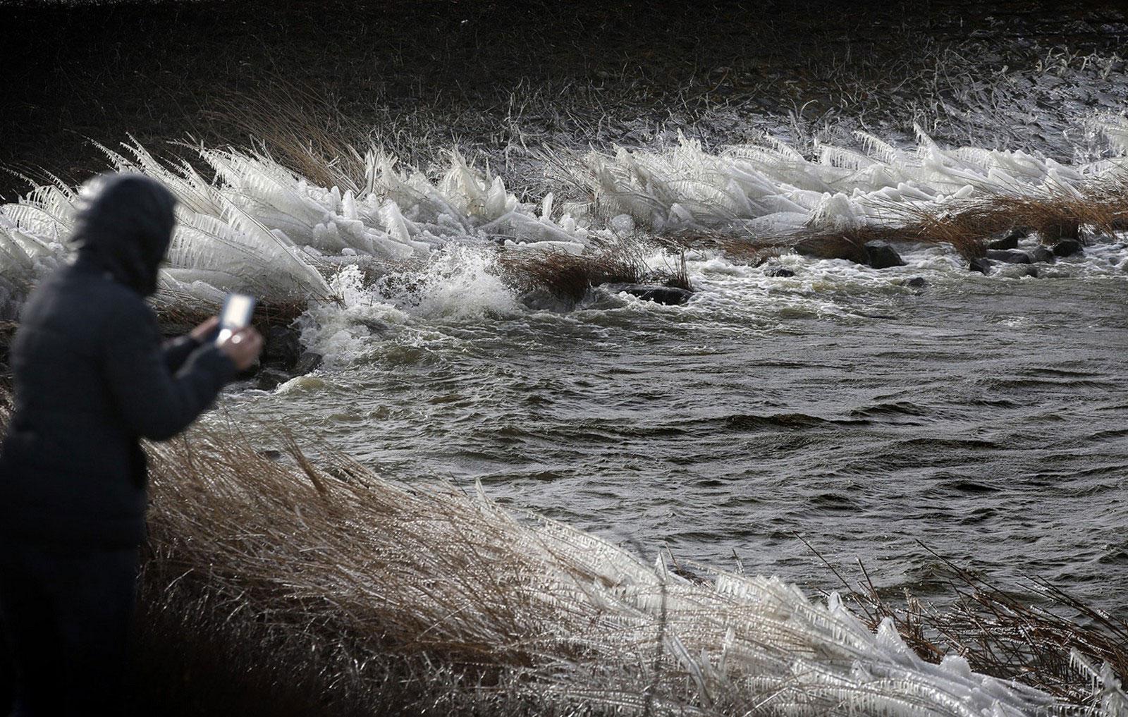 замерзшая трава у воды