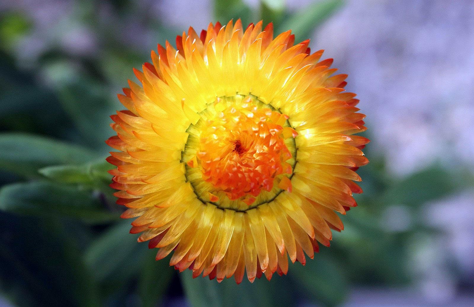 Весенние цветы, фотография