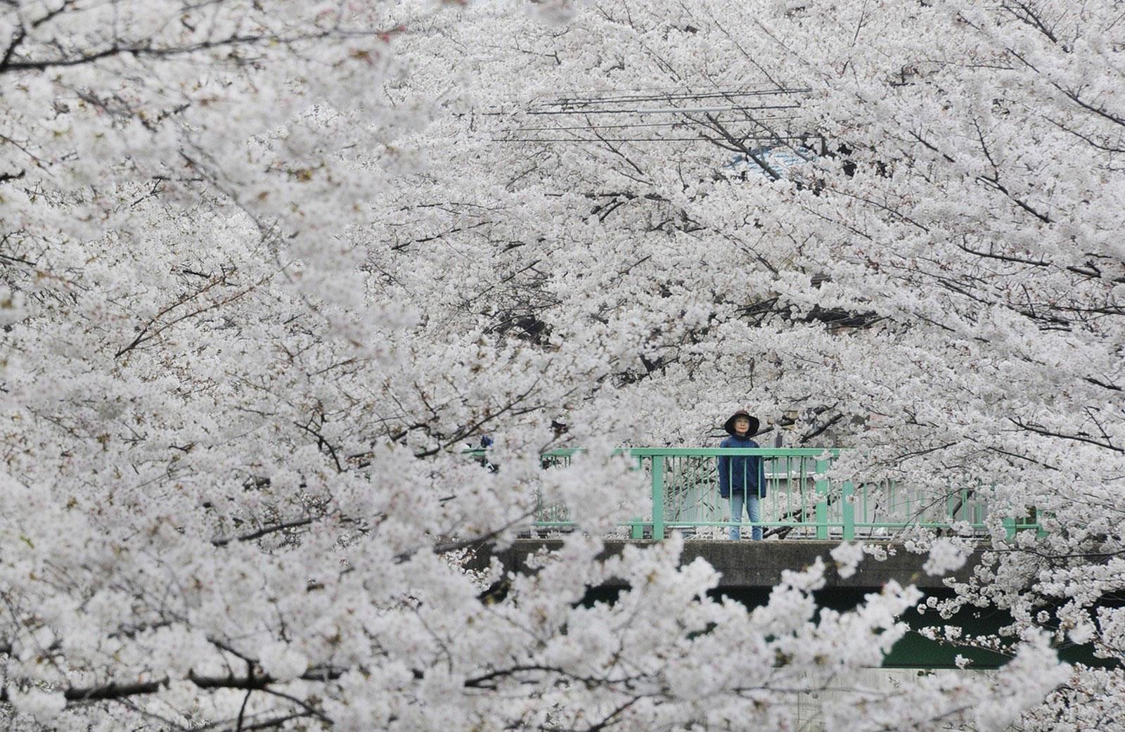 Вишневый сад, снимок