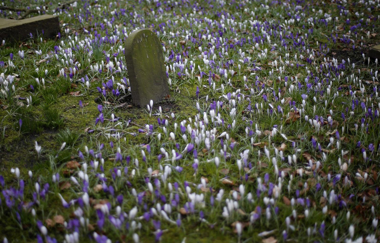 цветы среди надгробий