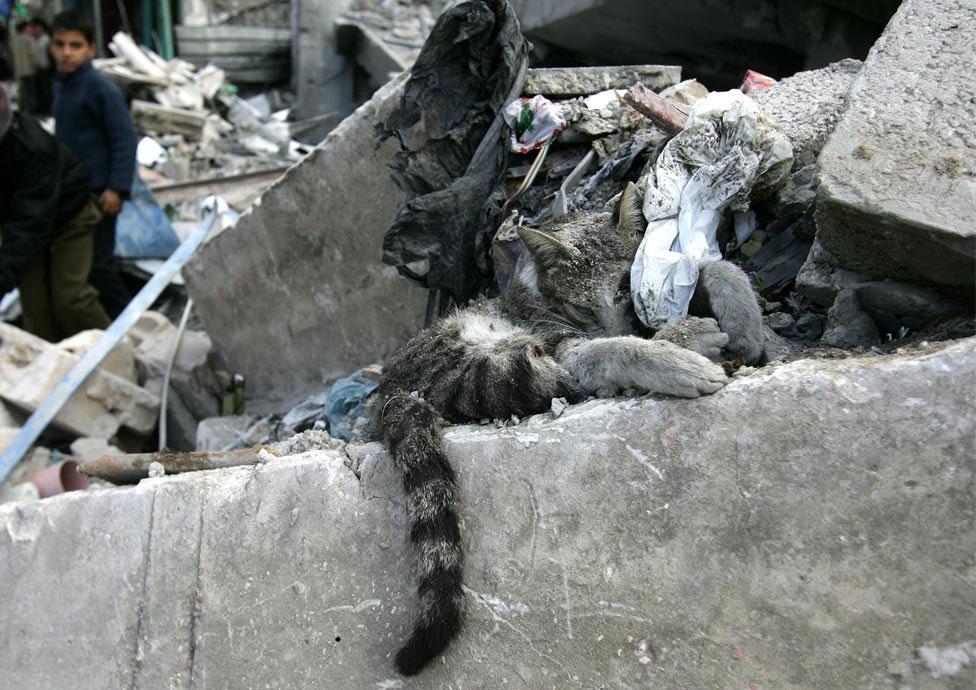 кошка под обломками, фото