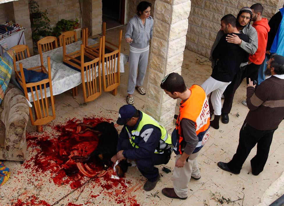 убитая собака в секторе Газа, фото