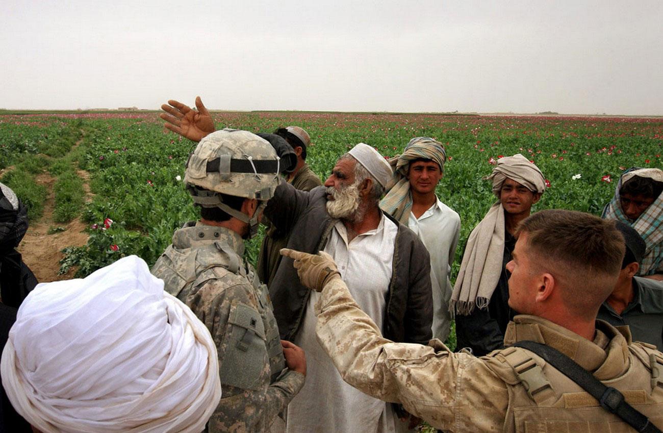 фермер показывает маковые поля Афганистана, фото