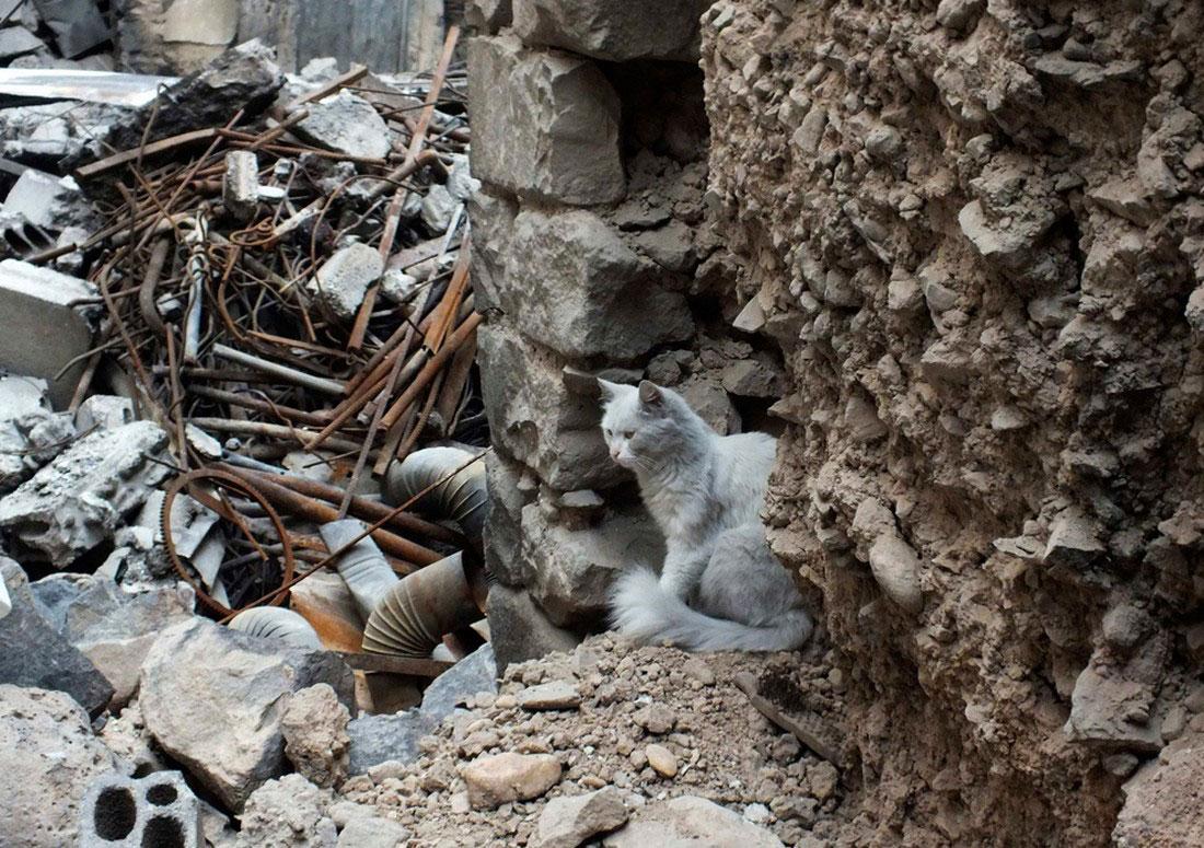 Кошка на руинах в Хомсе, фото, Сирия