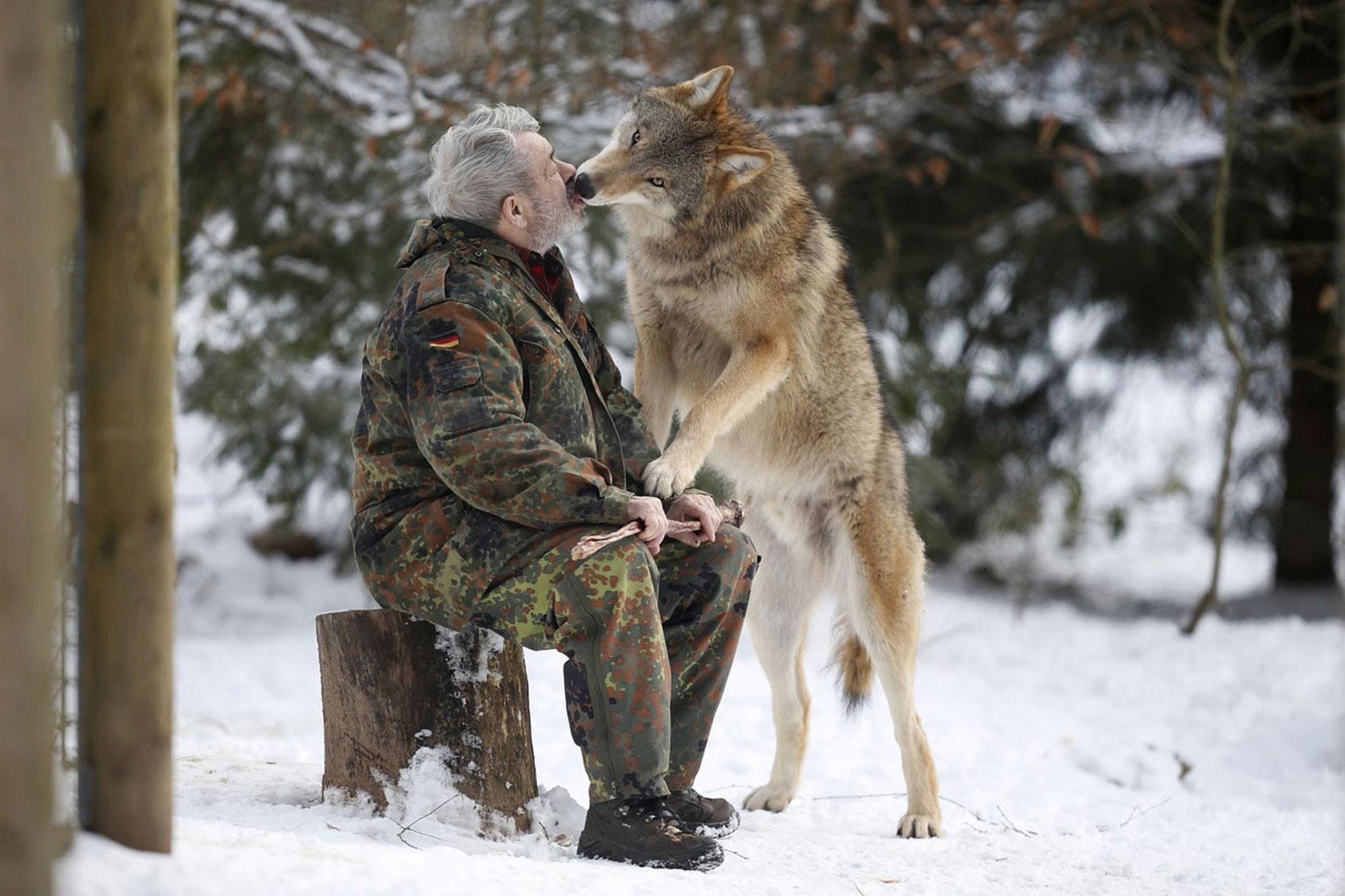 Лицо вернера фройнда фото волка