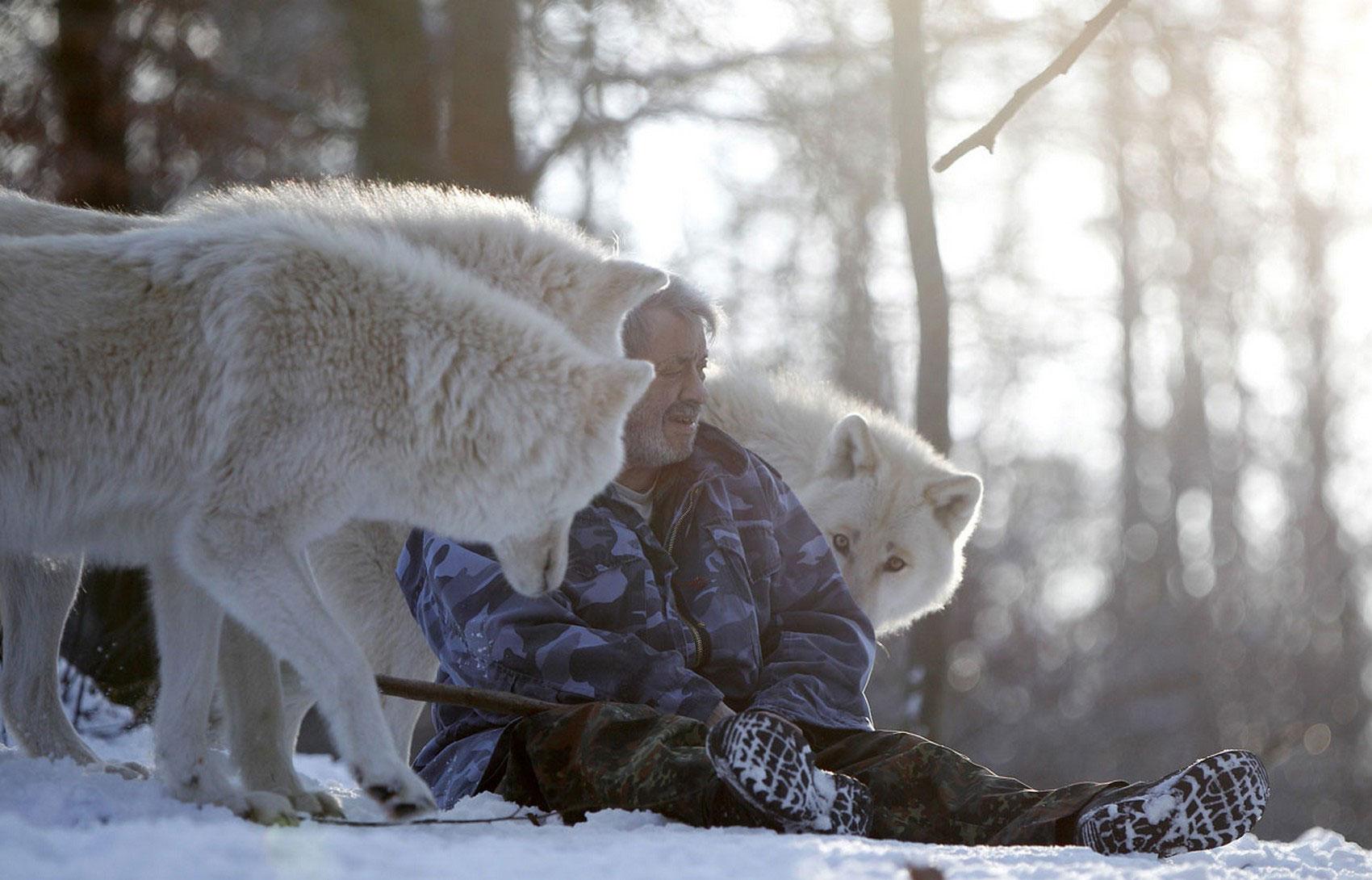 арктические волки, фото