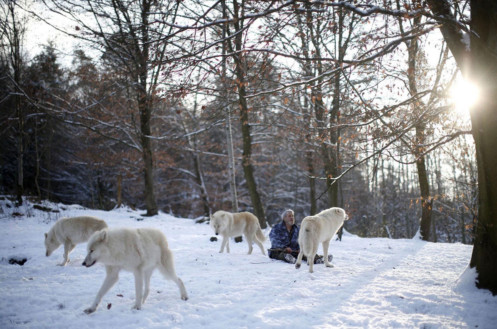 общение человека с волками, фото