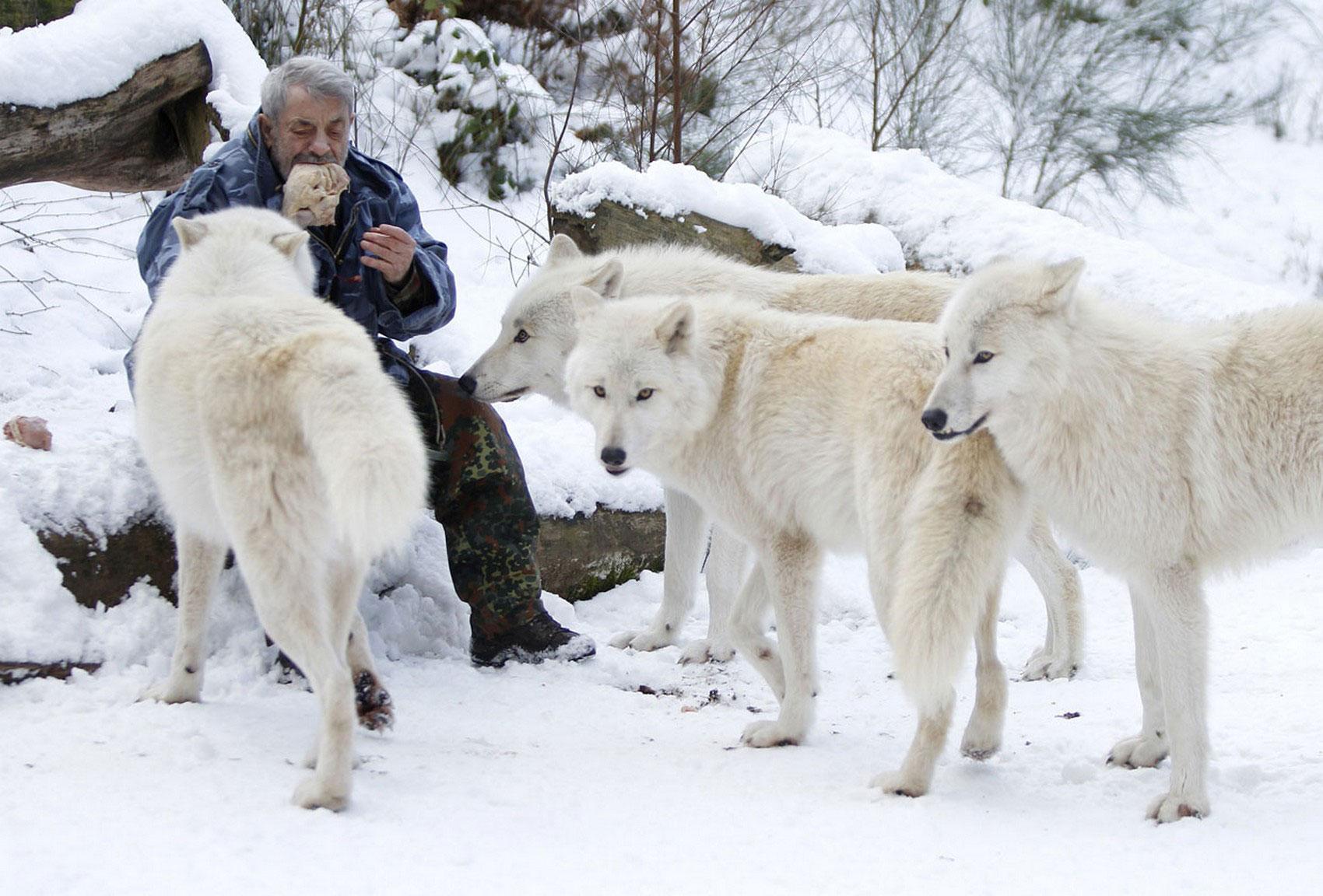 волк - личность, фото