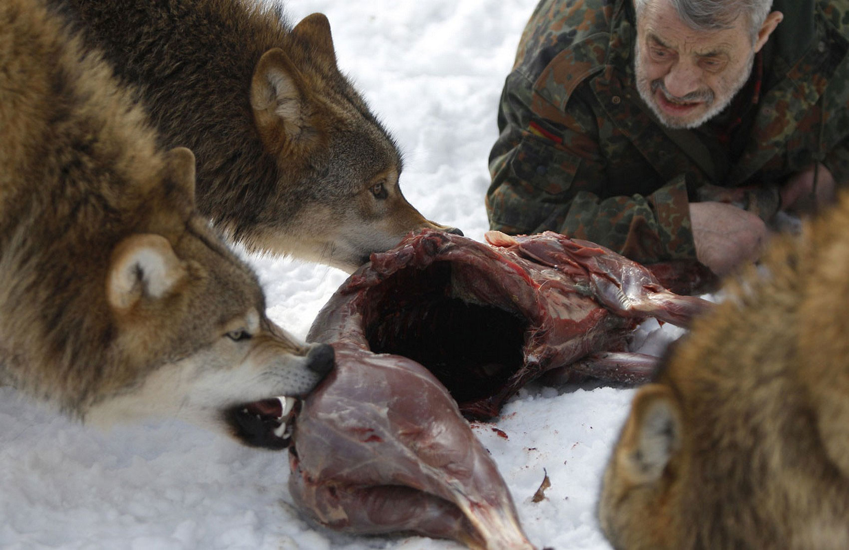 Вернер Фройнд - член волчьей стаи, фото