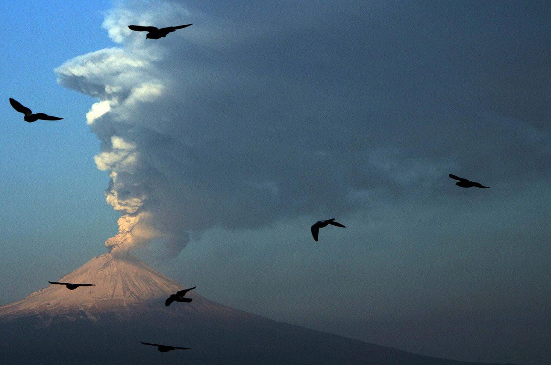 птицы возле вулкана Попокатепетль, фото