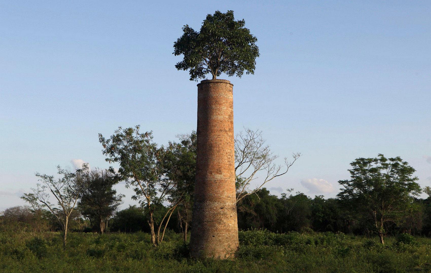 дерево на дымоходе, фото