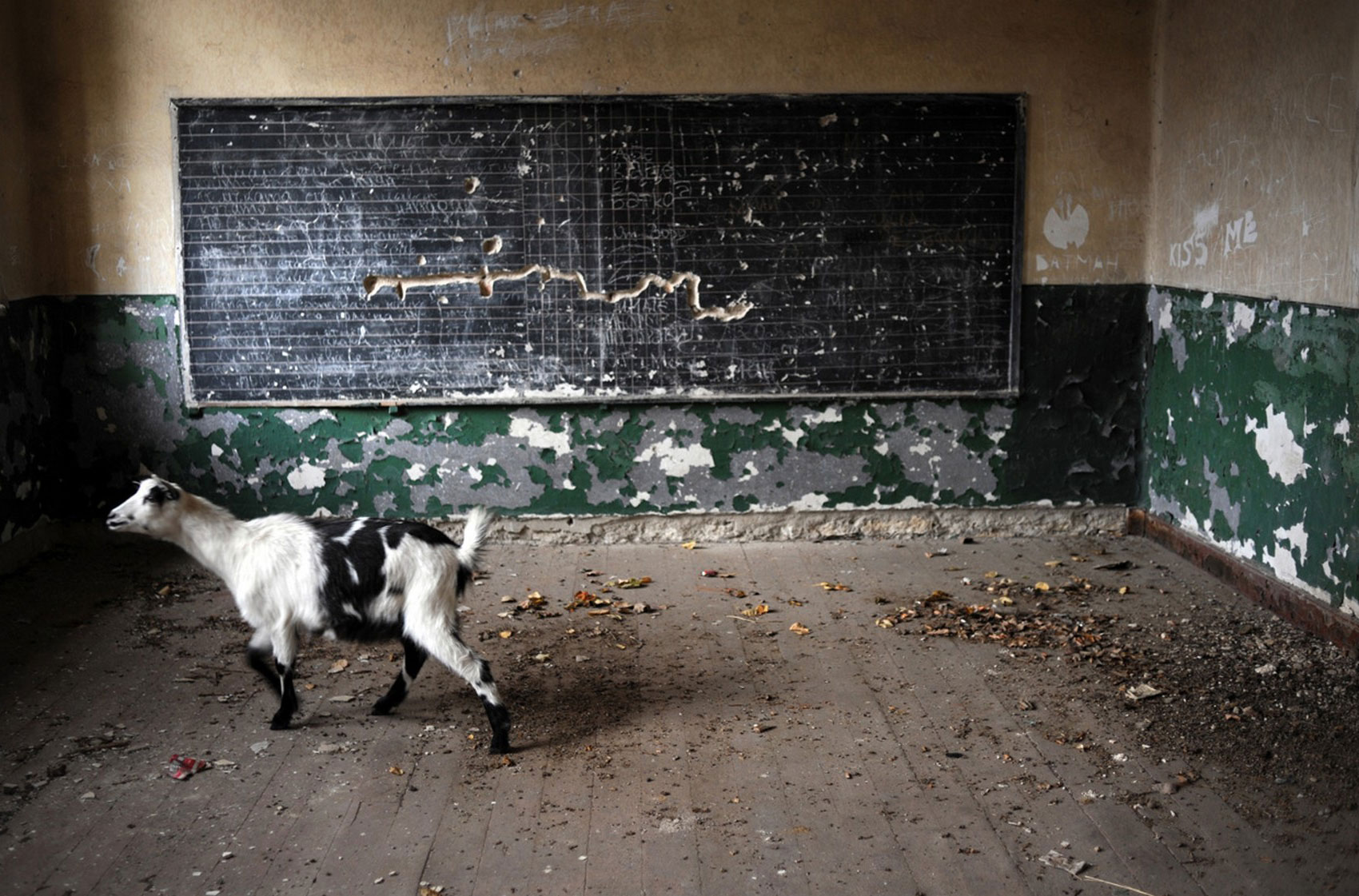 школа в селе Войница, фото