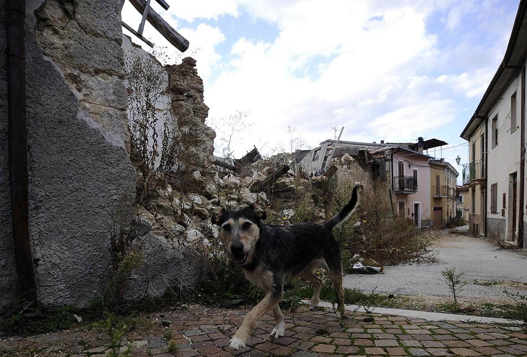 собака в Абруццо, фото