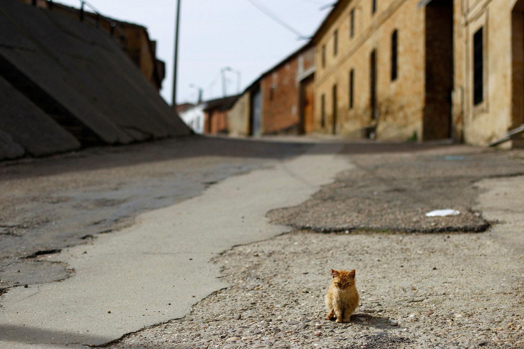 кот в Пелеас-де-Абахо, фото