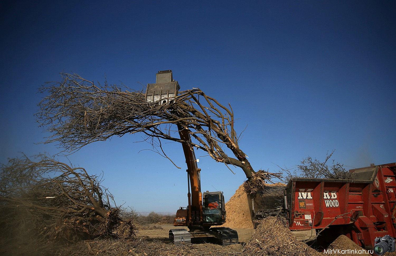 уборка деревьев