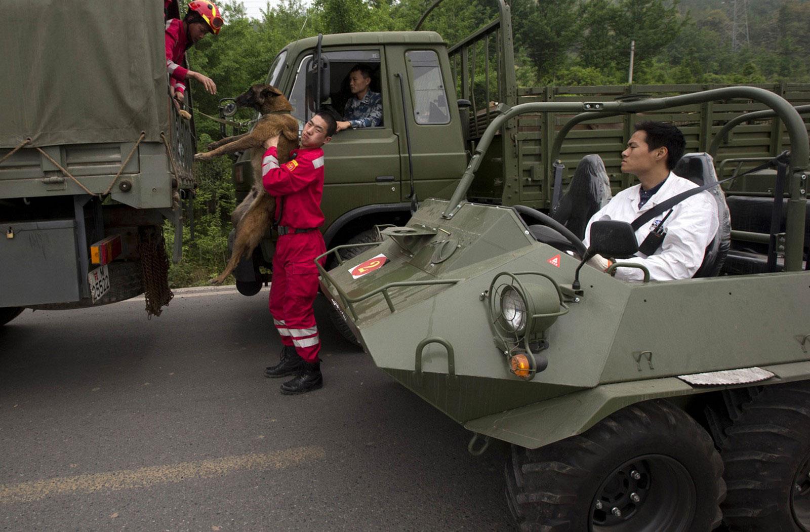 спасатели с собакой, фото