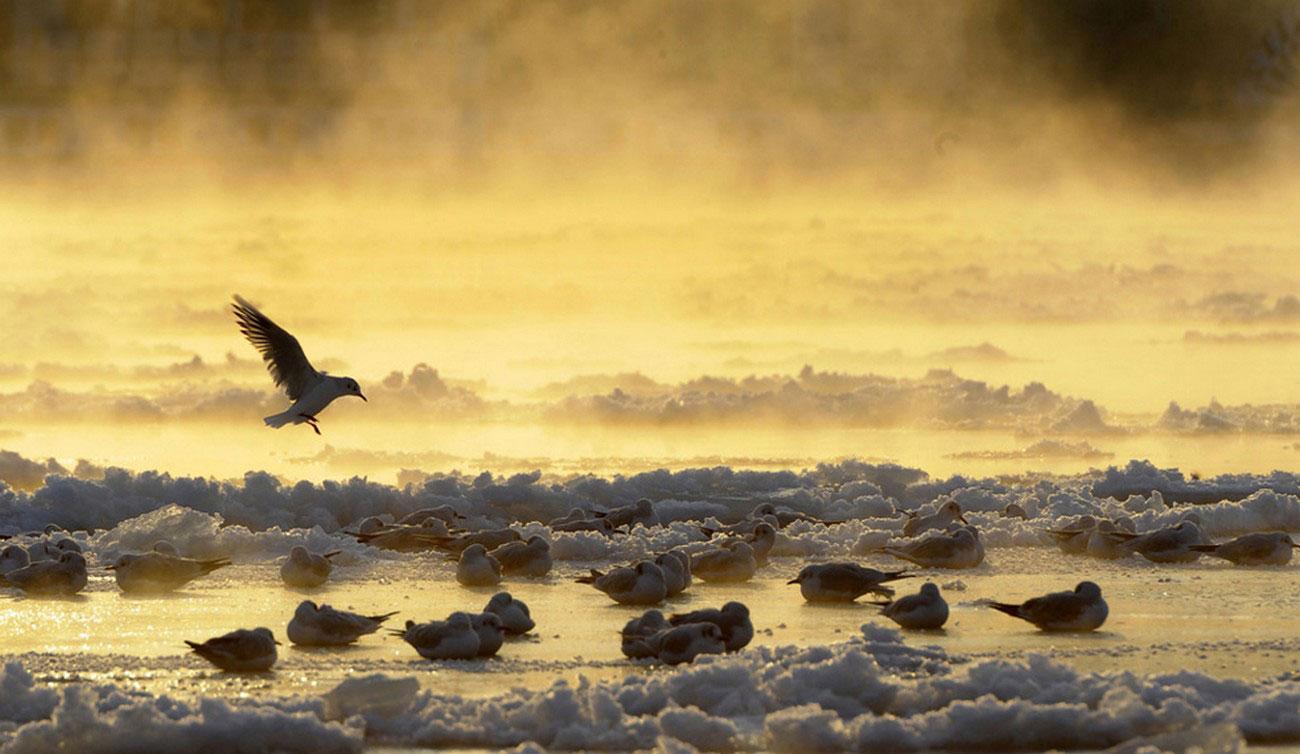 птицы в живой природе, фото