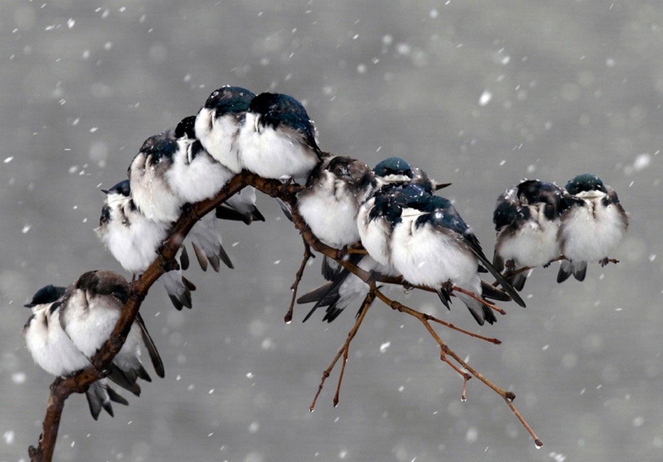 птицы в метель, фото