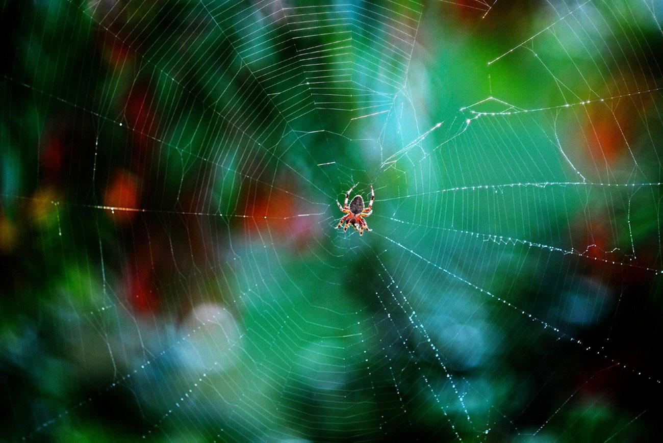 роса на паутине, фото