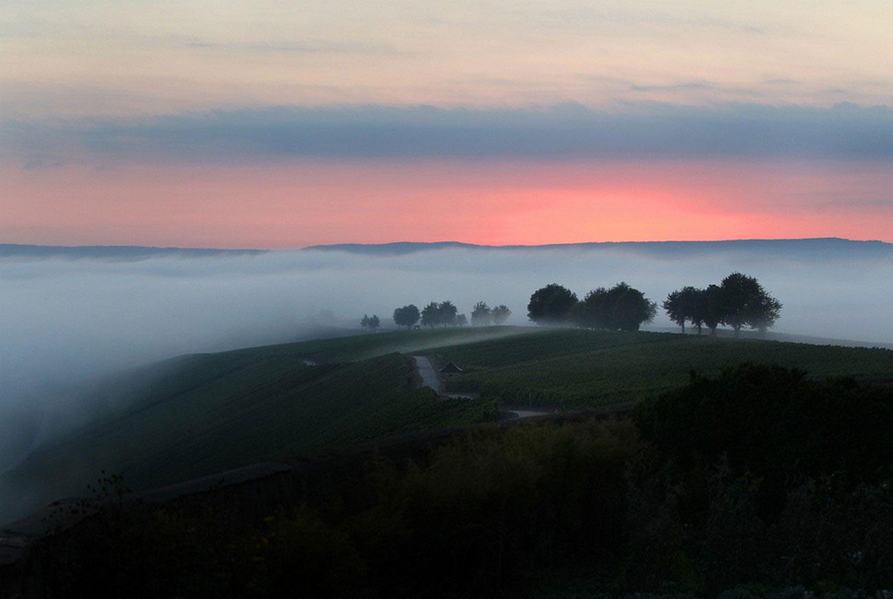 виноградники Германии, фото