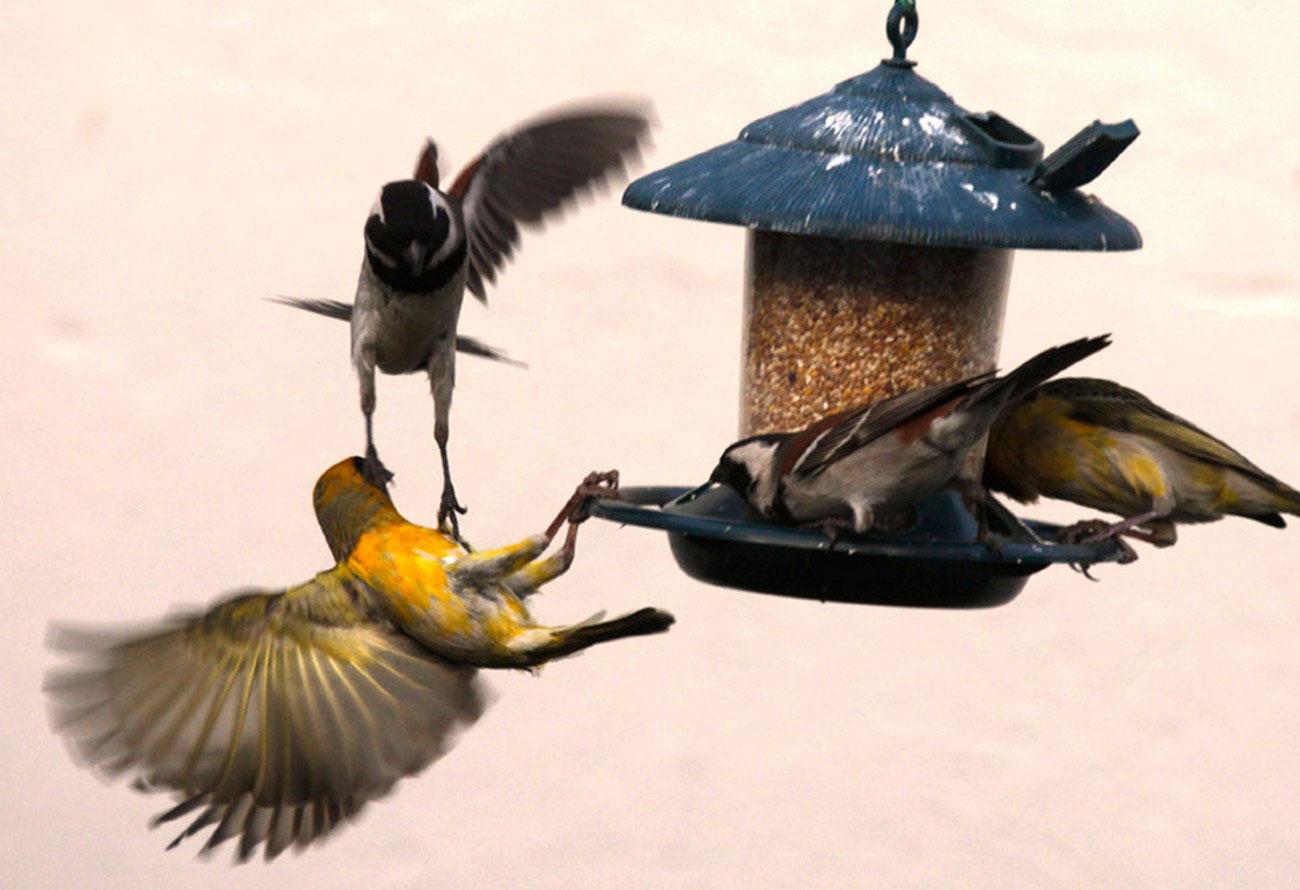 птицы у кормушки, фото