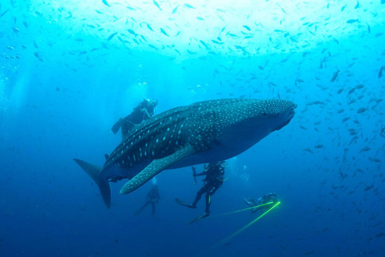 китовая акула на островах, фото