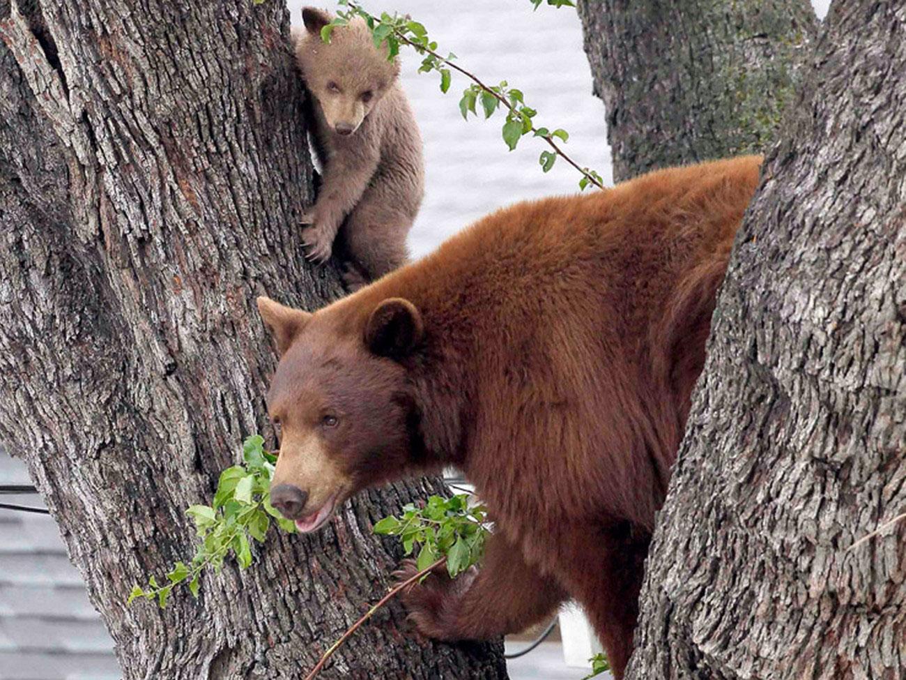 Медведица с детенышем, фото