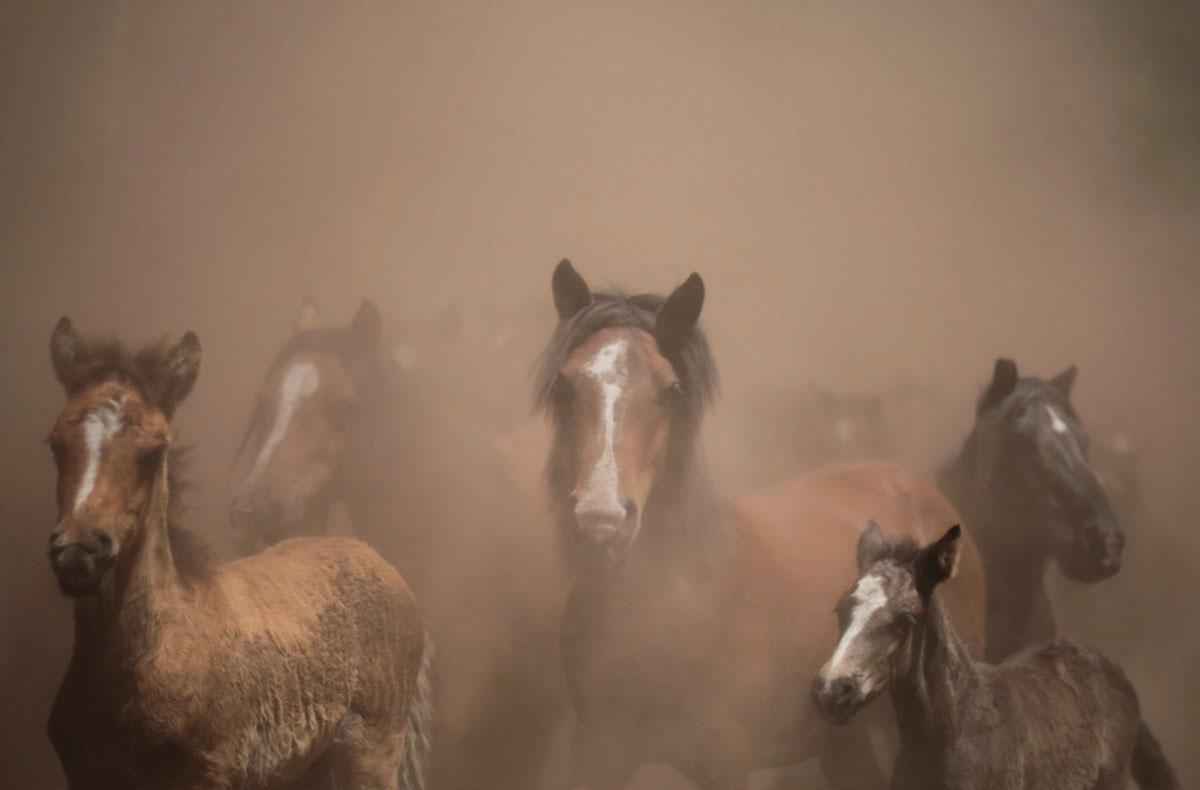дикие кони