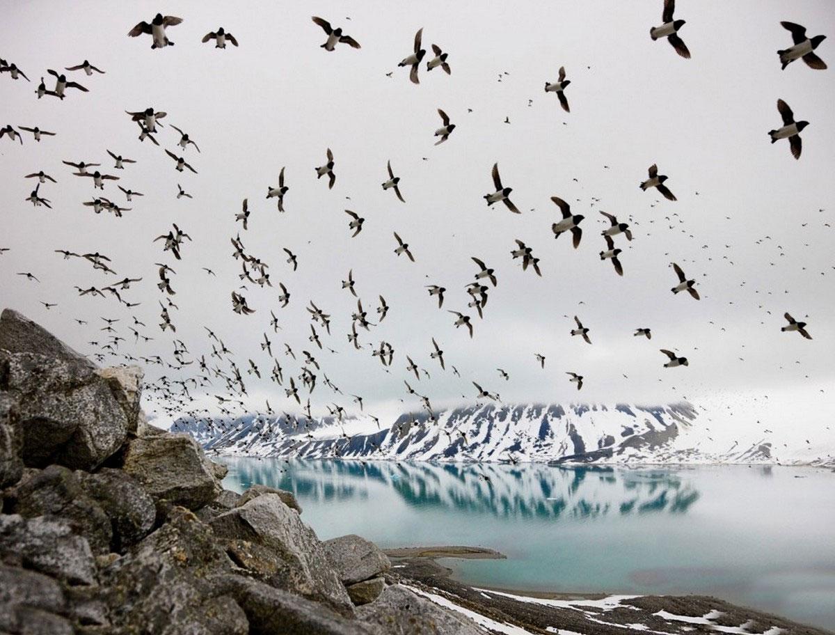 птицы на скалистых берегах