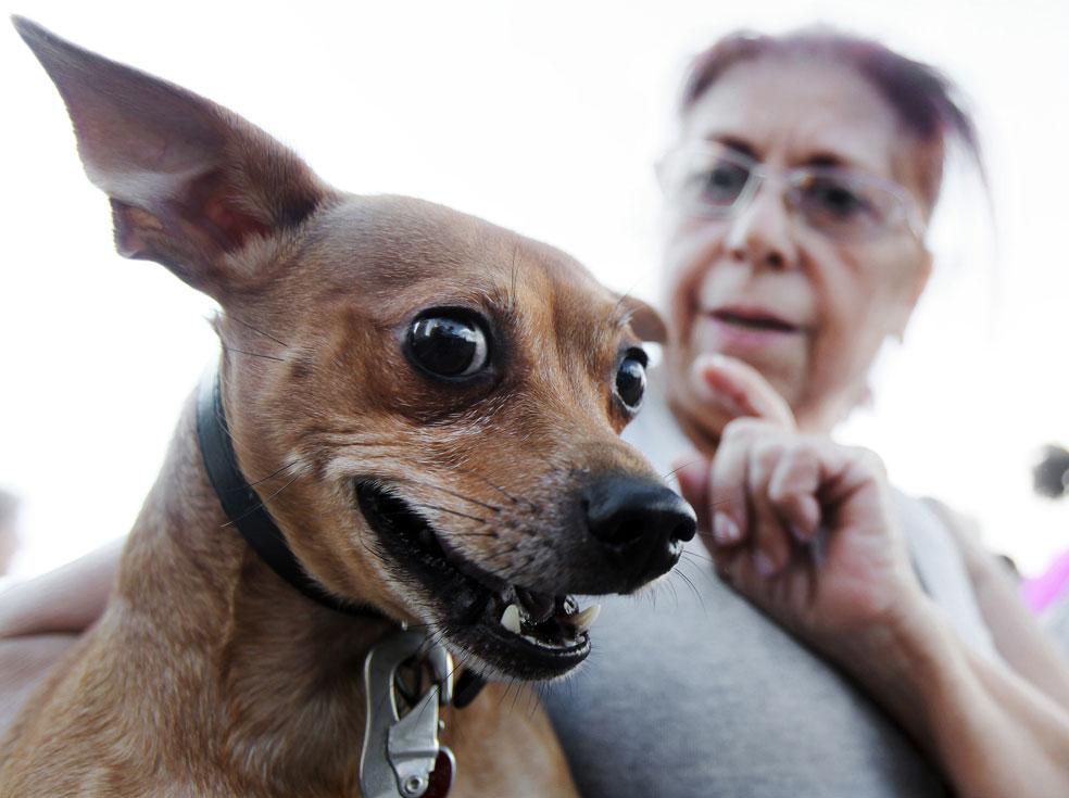 женщина с домашним животным, фото