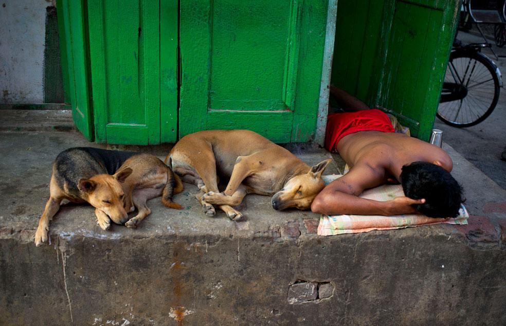 Мужчина спит с бродячими собаками, фото