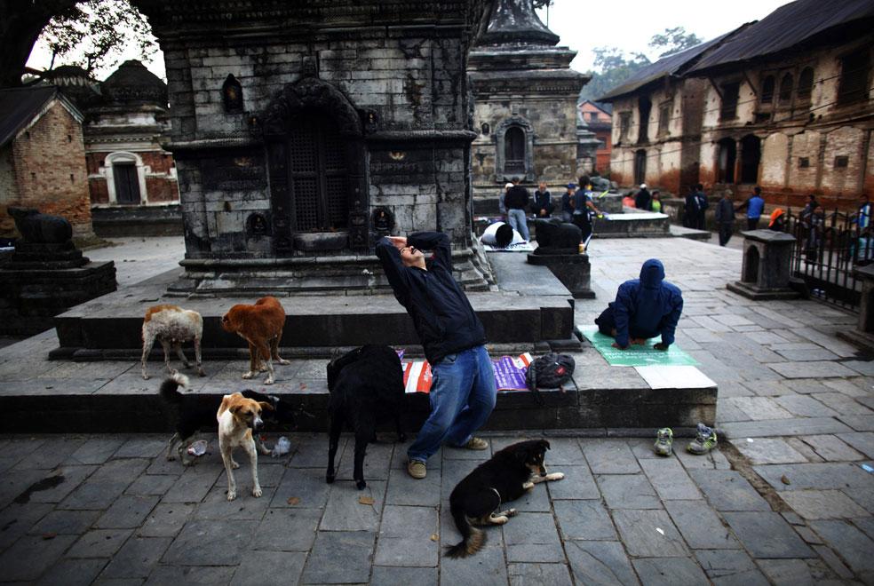 мужчина с собаками, фото