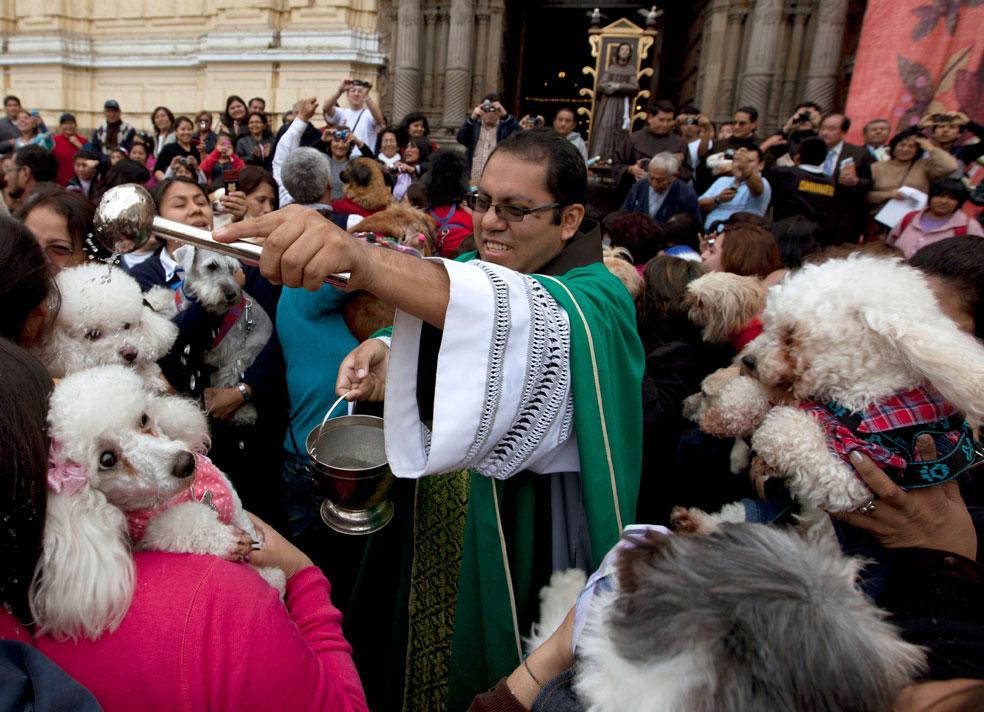 священник благословляет животных, фото