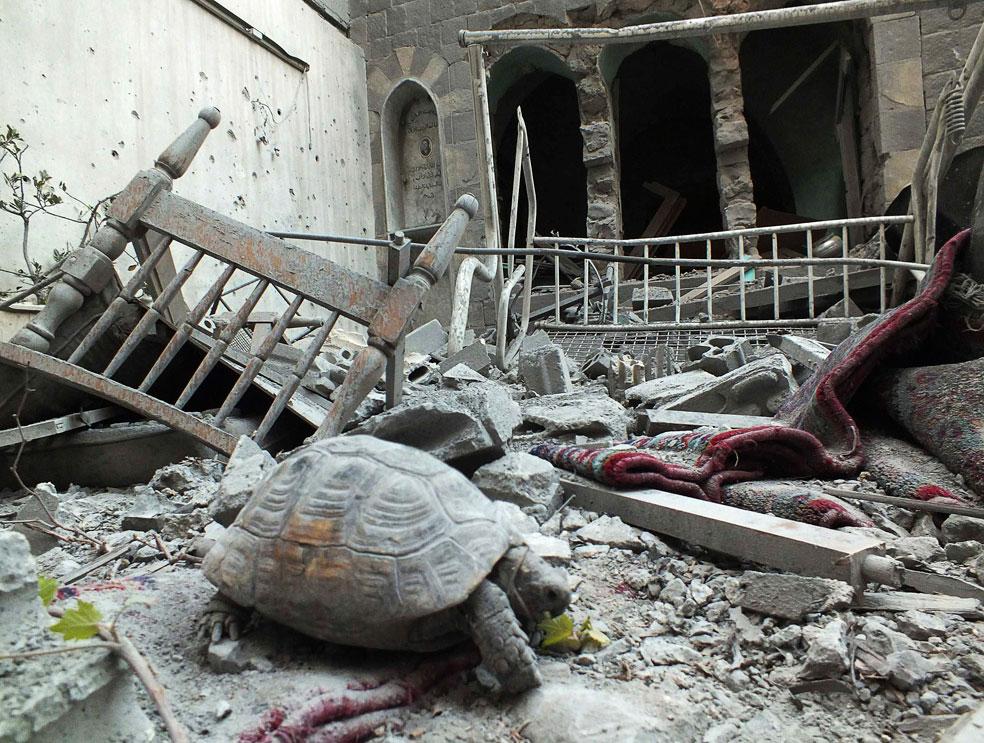 Черепаха на руинах, фото