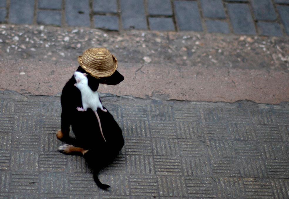 собака с мышью на спине, фото
