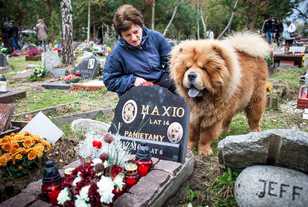 кладбище домашних животных, фото