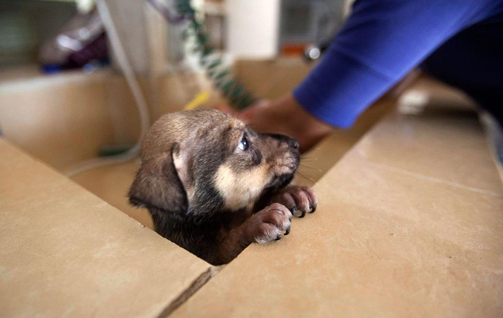 щенок в приюте, фото