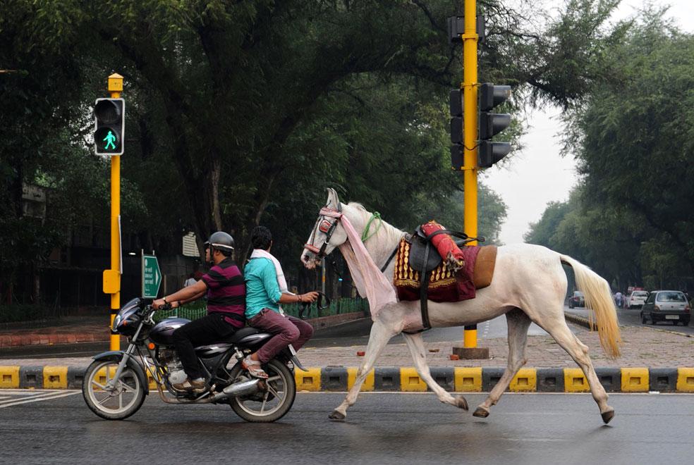 лошадь для свадьбы, фото