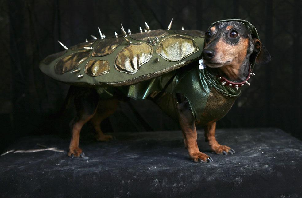 собака в костюме, фото